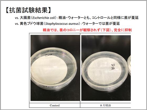 小国杉アロマオイル-抗菌試験結果-黄色ブドウ球菌を抑制